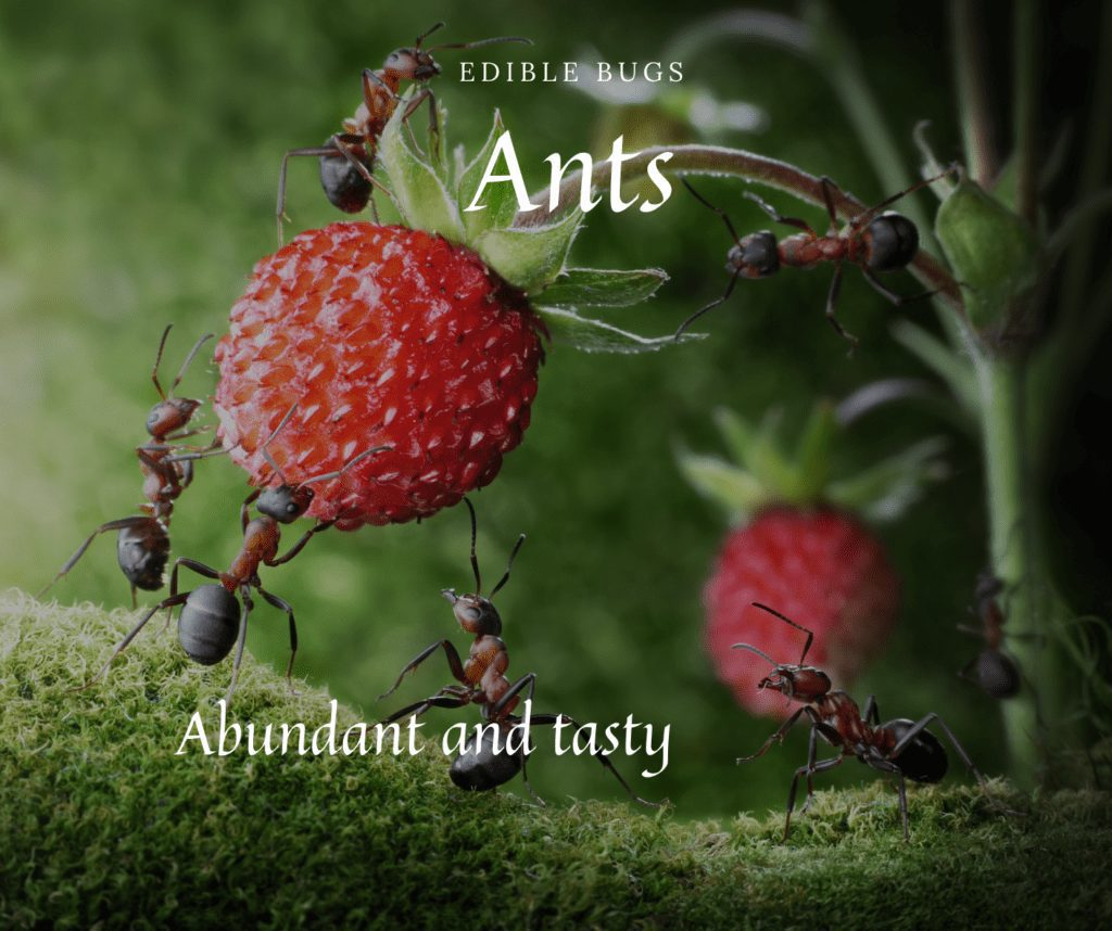 Edible Insects Ants