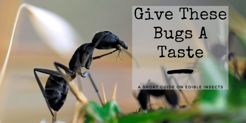 Edible Bugs Featured Image